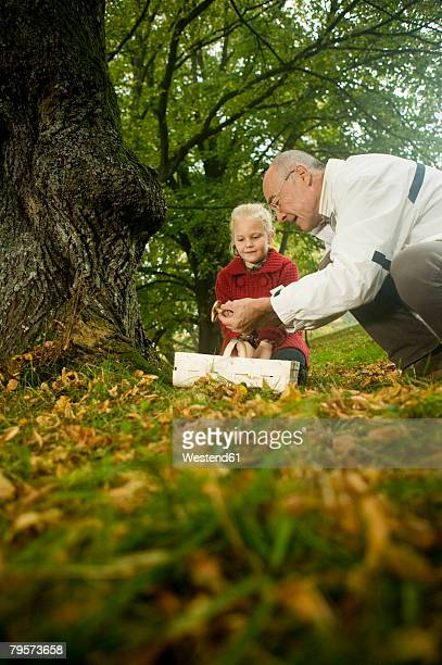 'Germany, Baden-W?rttemberg, Swabian mountains, Grandfather and granddaughter searching mushrooms in the forest, portrait'