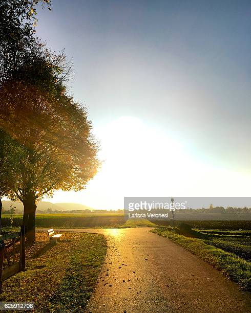 Germany, Baden-Württemberg, Tree and bench in autumnal landscape