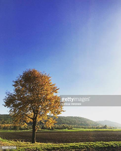 Germany, Baden-Württemberg, Tree in autumnal landscape