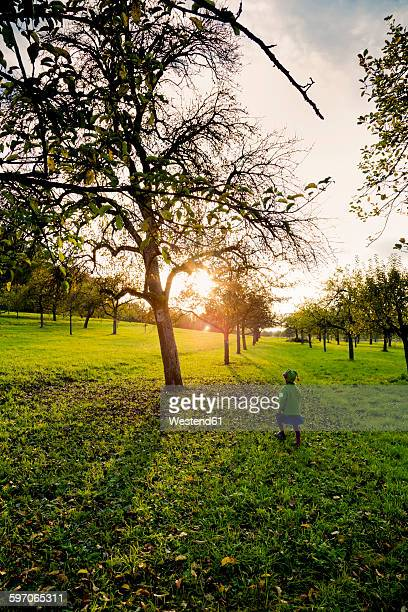 Germany, Baden-Wuerttemberg, back view of little girl walking on a meadow at evening twilight