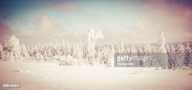 Germany, Baden-Wuerttemberg, Black Forest, Schliffkopf, snow-covered landscape