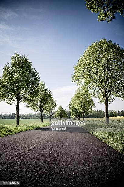 Germany, Baden-Wuerttemberg, Einsiedel near Tuebingen, Avenue in spring