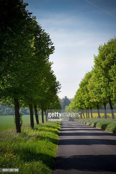 Germany, Baden-Wuerttemberg, Einsiedel near Tuebingen, Avenue with delivery van in spring