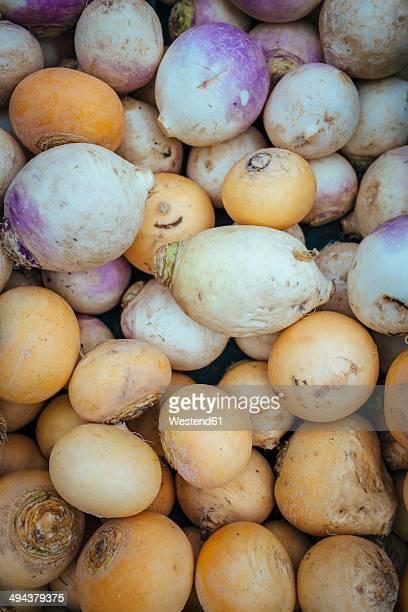 germany, baden-wuerttemberg, freiburg, vegetable market, rutabagas (brassica napus subsp. rapifera) - nabo sueco fotografías e imágenes de stock