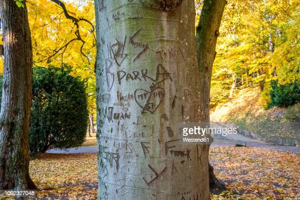 germany, baden-wuerttemberg, heidelberg,  names and hearts scarified in tree trunks - mid section stock pictures, royalty-free photos & images