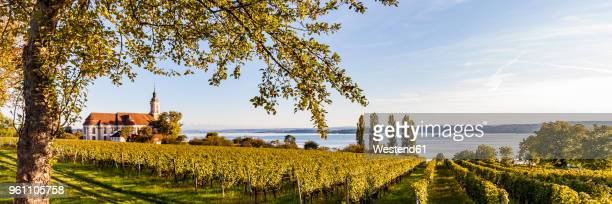 germany, baden-wuerttemberg, lake constance, birnau basilica and vineyard - bodensee stock-fotos und bilder