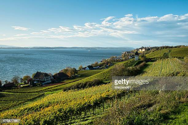 germany, baden-wuerttemberg, lake constance district, haitnau, vineyard and lake constance - bodensee stock-fotos und bilder