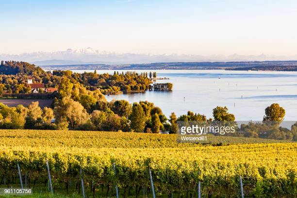 germany, baden-wuerttemberg, lake constance near ueberlingen, vineyards - bodensee stock-fotos und bilder