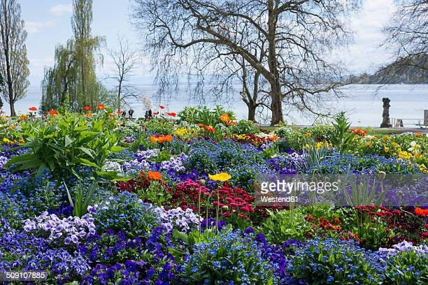 germany, baden-wuerttemberg, mainau, blooming flowers at lakeshore - bodensee stock-fotos und bilder