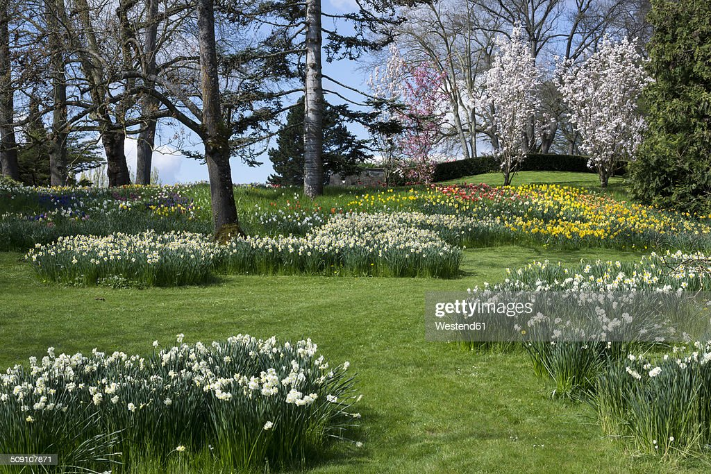 Germany, Baden-Wuerttemberg, Mainau, Blooming tulips and daffodils : ストックフォト