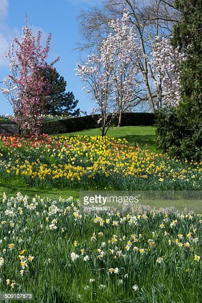 Germany, Baden-Wuerttemberg, Mainau, Blooming tulips and daffodils