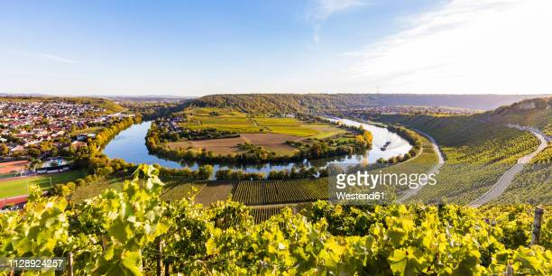 germany, baden-wuerttemberg, mundelsheim, neckar river loop and vine yards - tal stock-fotos und bilder