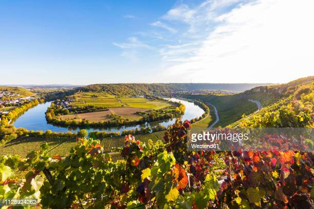 germany, baden-wuerttemberg, mundelsheim, neckar river loop and vine yards - baden württemberg stock pictures, royalty-free photos & images