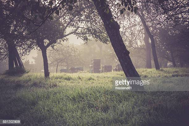 Germany, Baden-Wuerttemberg, near Tuebingen, Beehives on meadow with scattered fruit trees