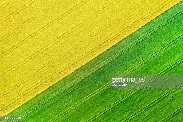 germany, baden-wuerttemberg, rems-murr-kreis, aerial view of fields in spring - oilseed rape stock pictures, royalty-free photos & images
