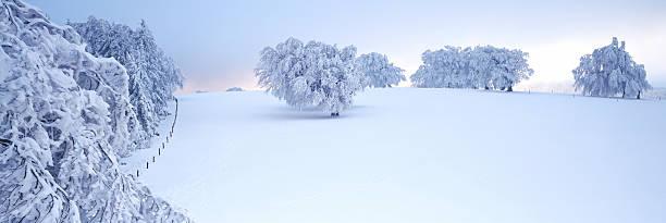 Germany, Baden-Wuerttemberg, Schwarzwald, Schauinsland, Snow covered landscape