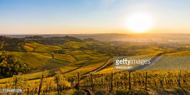 germany, baden-wuerttemberg, stuttgart untertuerkheim, vineyards in autumn at sunset - baden württemberg stock pictures, royalty-free photos & images