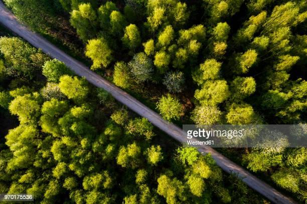 germany, baden-wuerttemberg, swabian alb, fils valley, aerial view of schurwald in spring - weg stock-fotos und bilder