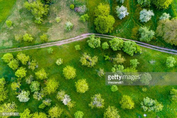 Germany, Baden-Wuerttemberg, Swabian Franconian forest, Rems-Murr-Kreis, Aerial view of meadow with scattered fruit trees and dirt road