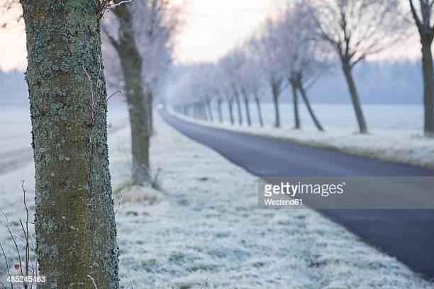 Germany, Baden-Wuerttemberg, Tuebingen, Einsiedel, avenue in winter in the morning