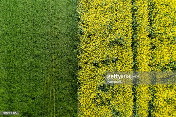 germany, bavaria, aerial view of rape fields - oilseed rape stock pictures, royalty-free photos & images