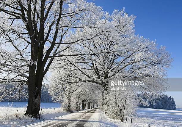 Germany - Bavaria - : alley with trees at winter