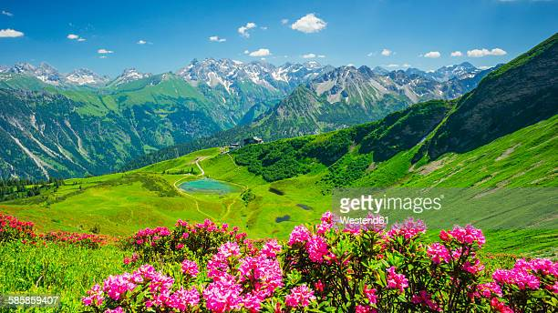 Germany, Bavaria, Allgaeu Alps, Fellhorn, View to Schlappolt Lake, Alpine roses in the foreground