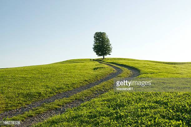 Germany, Bavaria, Allgäu, Single tree next to farm track