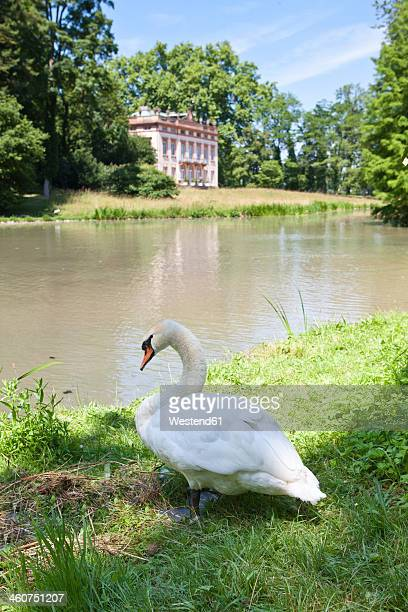 Germany, Bavaria, Aschaffenburg, View of Schonbuch Castle with swan
