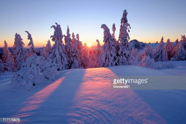 Germany, Bavaria, Bavarian Forest in winter, Great Arber, Arbermandl, snow-capped spruces, sunset