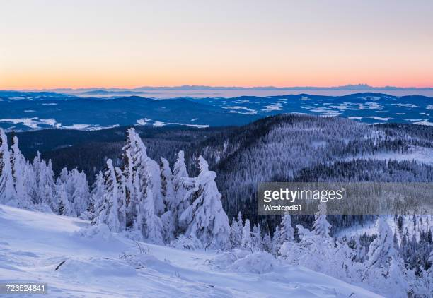 germany, bavaria, bavarian forest in winter, great arber, snow-capped spruces in the morning - nationalpark stock-fotos und bilder