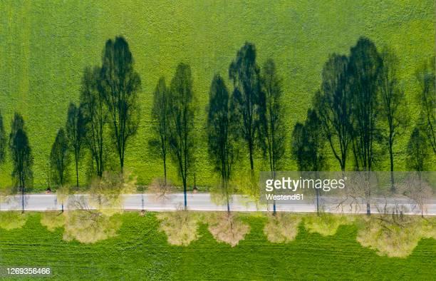 germany, bavaria, benediktbeuern, aerial view of treelined countryside road in summer - oberbayern stock-fotos und bilder