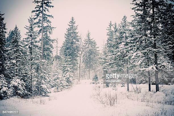 Germany, Bavaria, Berchtesgadener Land, winter landscape