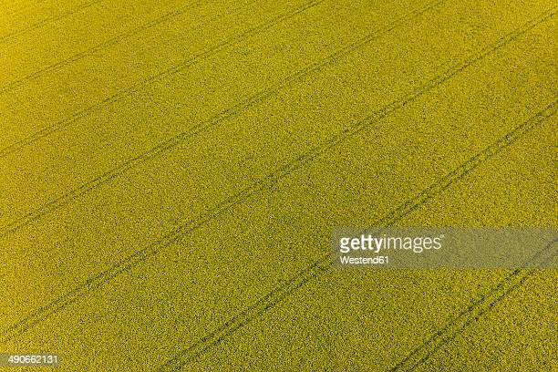 Germany, Bavaria, blossoming rape seed field, top view