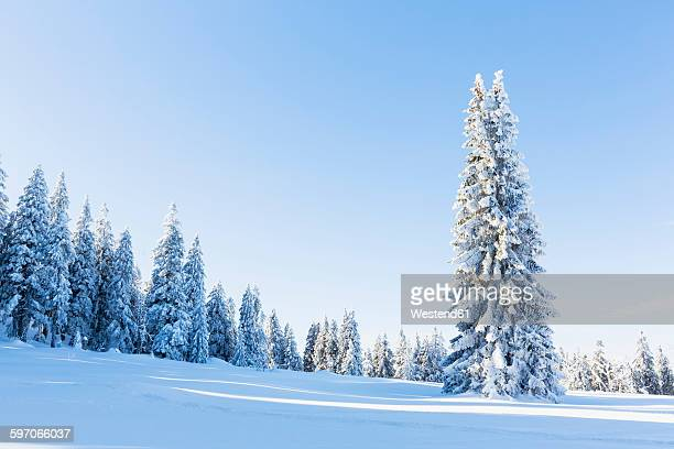Germany, Bavaria, Bohemian Forest in winter