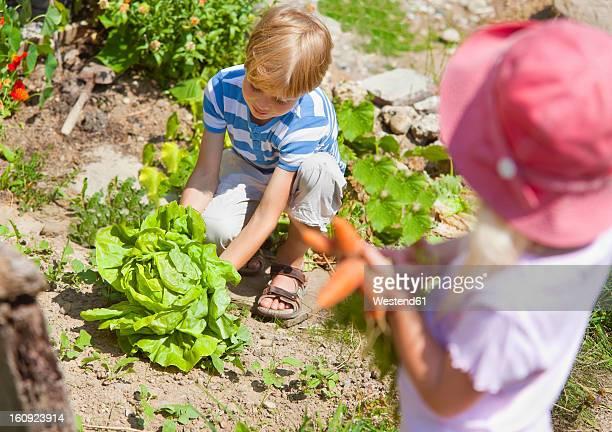 Germany, Bavaria, Boy and girl picking vegetables in garden