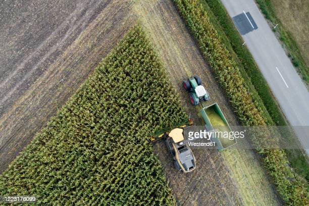 germany, bavaria, drone view of combine and tractor harvesting corn - verkehrswesen stock-fotos und bilder