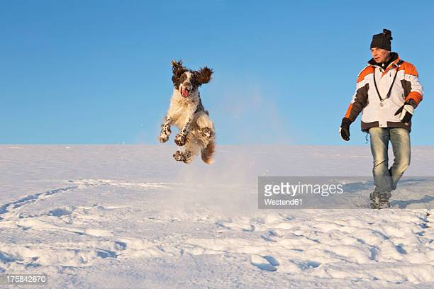 germany, bavaria, english springer spaniel and dog owner playing in snow - springer spaniel stock pictures, royalty-free photos & images