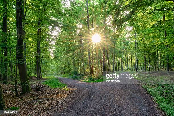 Germany, Bavaria, Franconia, Spessart, Track in forest, sun with sunbeams