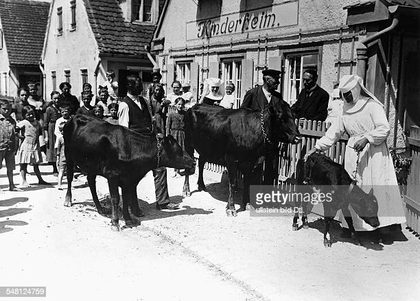 Germany Bavaria Free State Donated American dairy cows for a children's home in Bavaria during the economic crisis 1921 Photographer Philipp Kester...