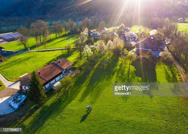 germany, bavaria, gaissach, drone view of sunlight illuminating countryside farmhouses - dorf stock-fotos und bilder