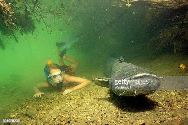 Germany, Bavaria, Girl diving with wels catfish, Silurus glandis, in river Alz