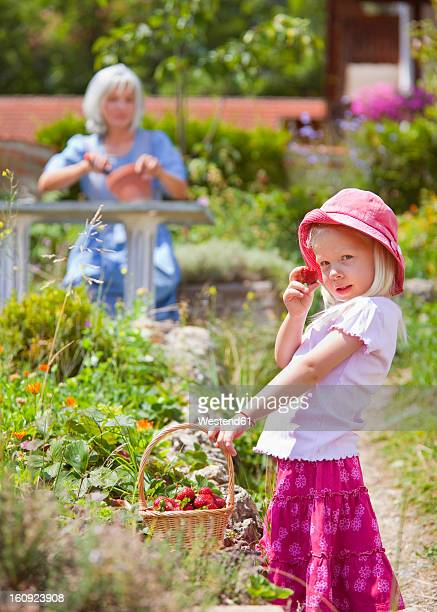 Germany, Bavaria, Girl picking starwberries in garden, mature woman in background