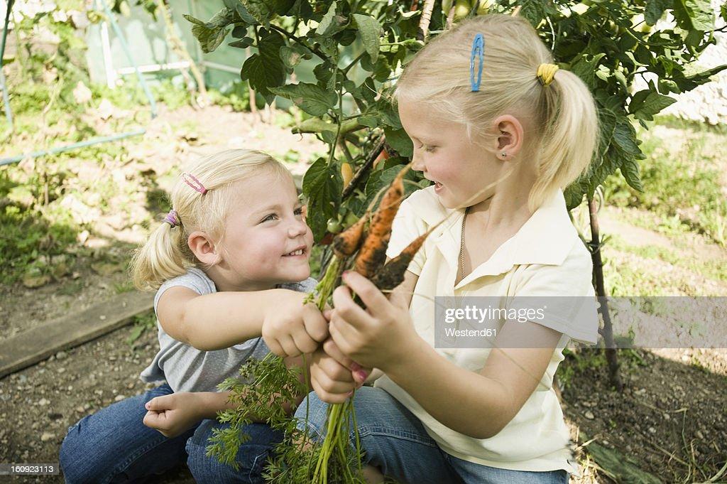 Germany, Bavaria, Girls gathering carrots in vegetable garden : Stock Photo