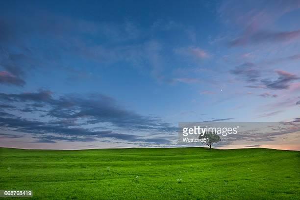 Germany, Bavaria, green meadow and single tree