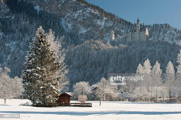 germany, bavaria, hohenschwangau, view of neuschwanstein castle at background - neuschwanstein castle stock pictures, royalty-free photos & images