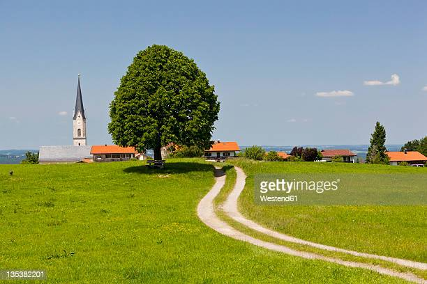 Germany, Bavaria, Irschenberg, View of Tilia tree and dirt track with village in background