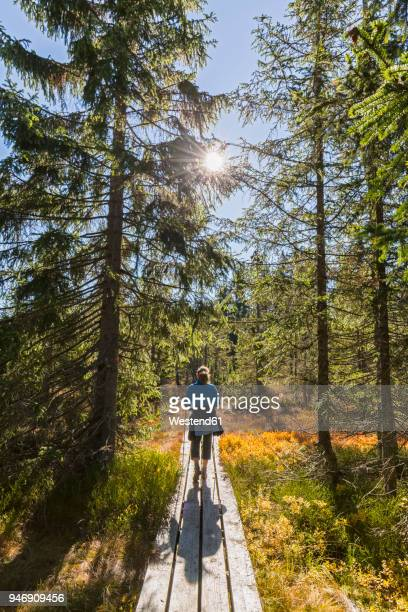 germany, bavaria, lower bavaria, bavarian forest national park, female hiker on wooden boardwalk - nature reserve stock pictures, royalty-free photos & images