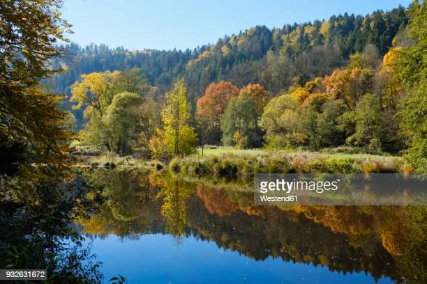 germany, bavaria, lower bavaria, bavarian forest, nature reserve obere ilz, ilz river in autumn - nationalpark stock-fotos und bilder