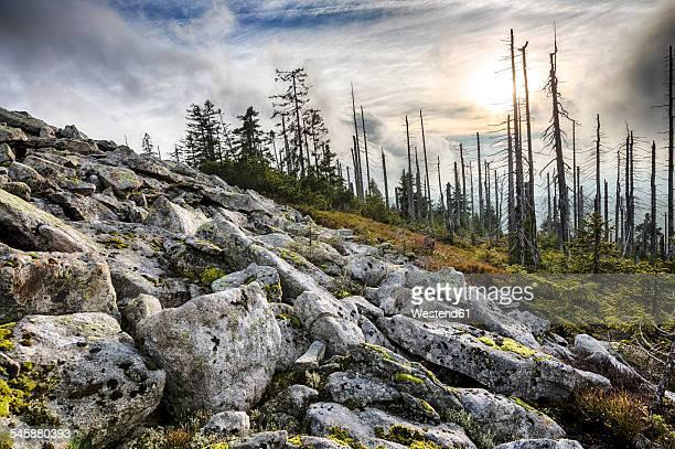 Germany, Bavaria, Lusen, Bavarian Forest National Park, Forest dieback in autumn